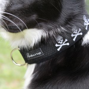 Dog Collar with Name Embroidered