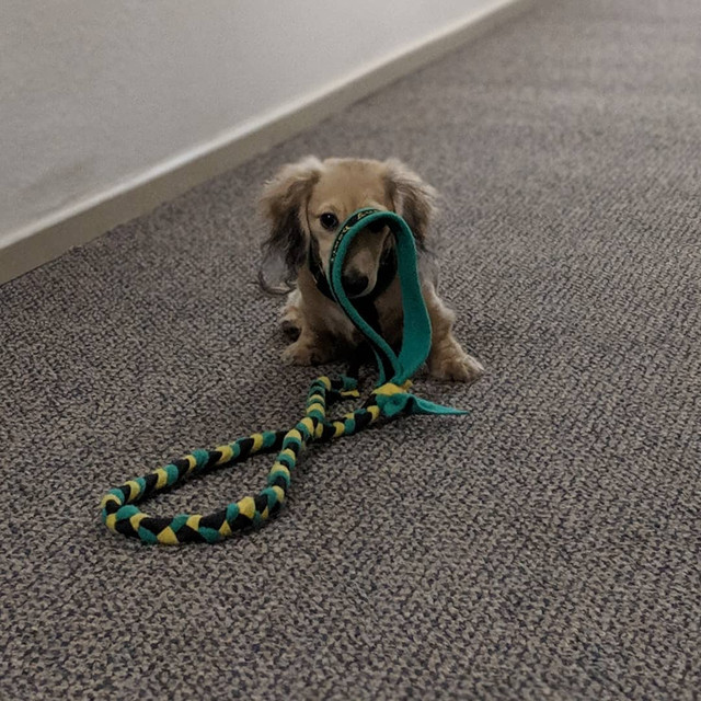slip-lead-for-small-dogs
