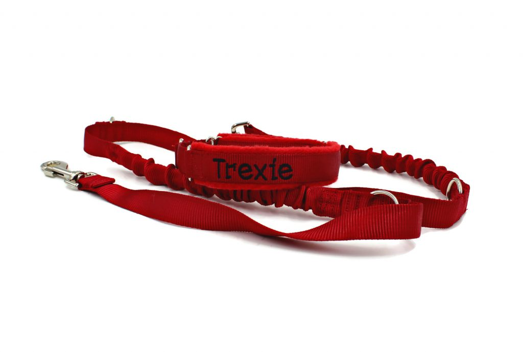 dog-collars-and-leashes